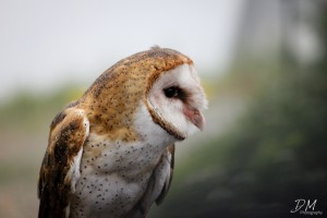 david-mao-owl